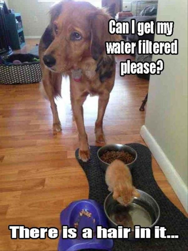 Can I Get My Water Filtered, Please? - Dog humor