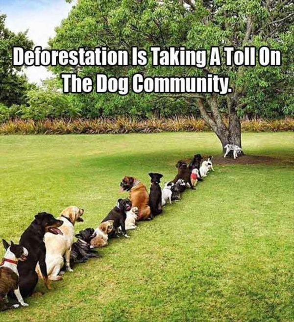 Deforestation - Dog humor
