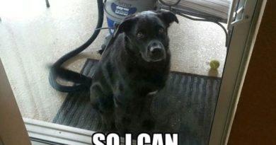 Dog Logic - Dog humor