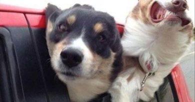 Faster! - Dog humor