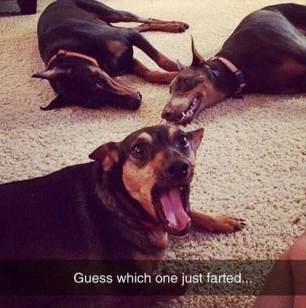 Guess... Dog humor