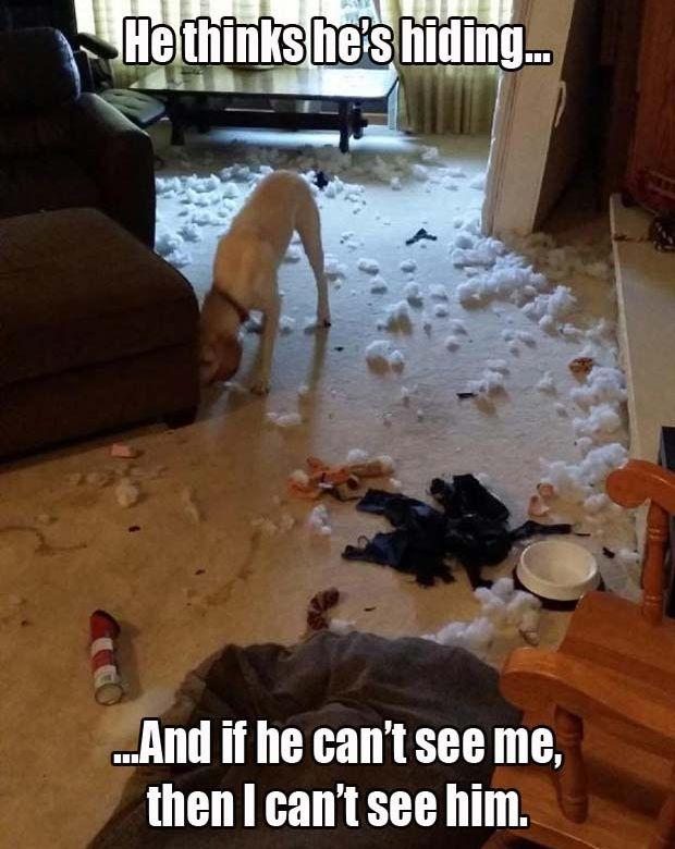 He Thinks He's Hiding - Dog humor