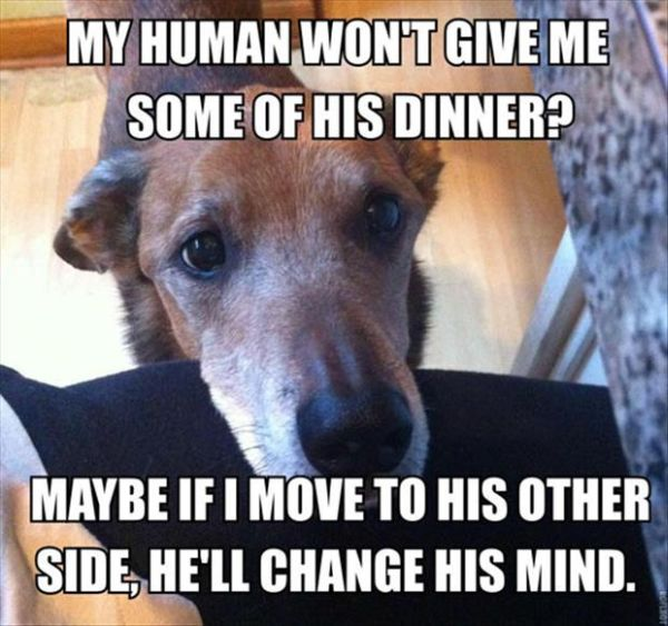 My Human Wont Give Some Of His Dinner - Dog humor