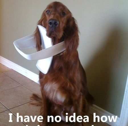 I Have No Idea... - Dog humor