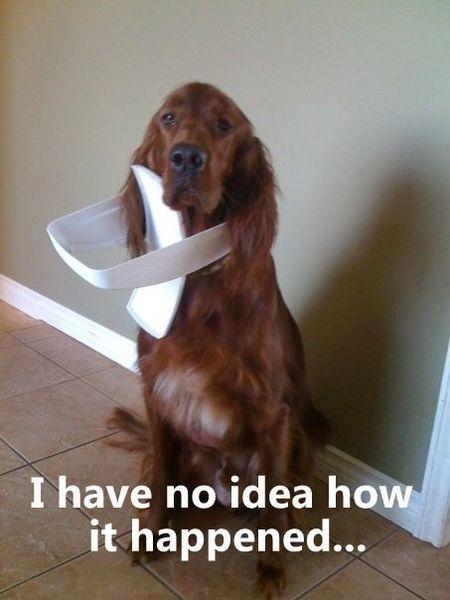 I Have No Idea... - Dog humor