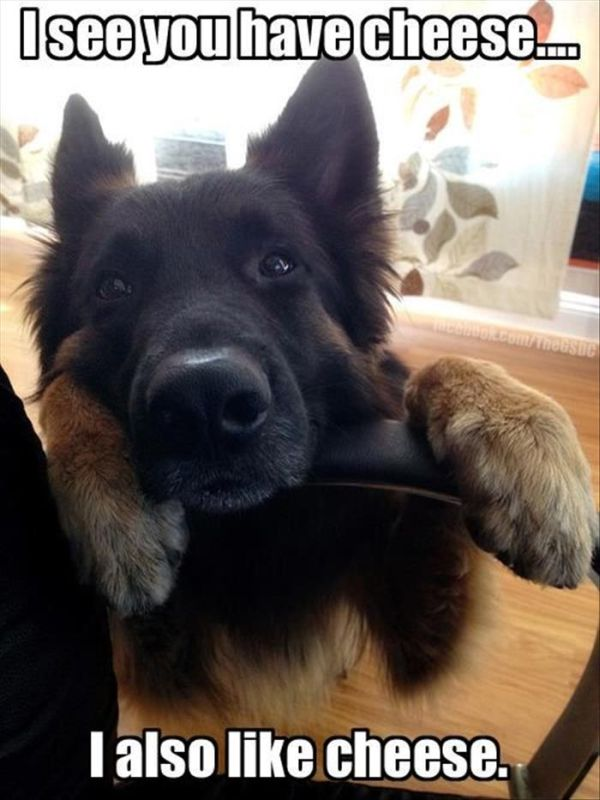 I See You Have Cheese... - Dog humor