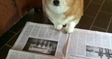 I'm Just Checking My Stocks - Dog humor