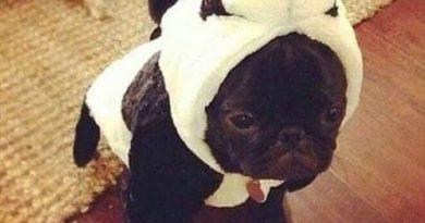 I'm A Panda - Dog humor
