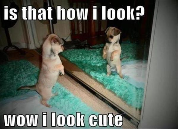 Is That How I Look? - Dog humor
