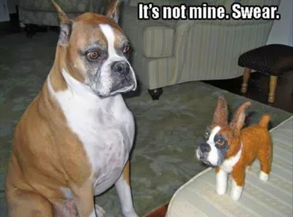 Its Not Mine - Dog humor