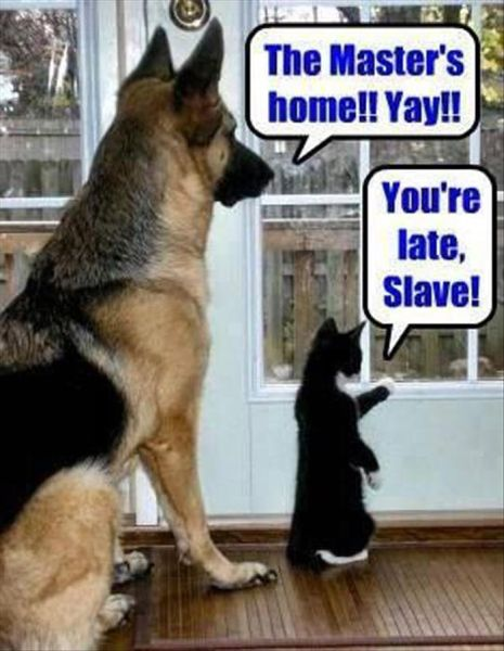 The Master's Home - Dog humor