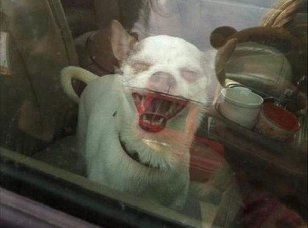 Mean Doggy - Dog humor