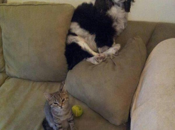 Mom, He Was Chasing Me Again - Dog humor