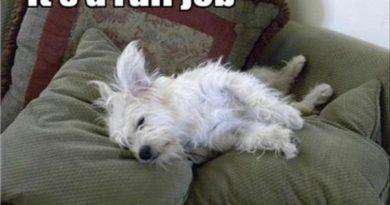 It's A Ruff Job - Dog humor