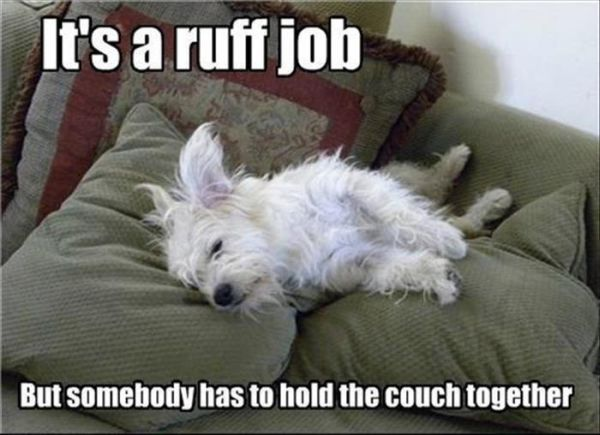 It's A Ruff Job - Dog humor