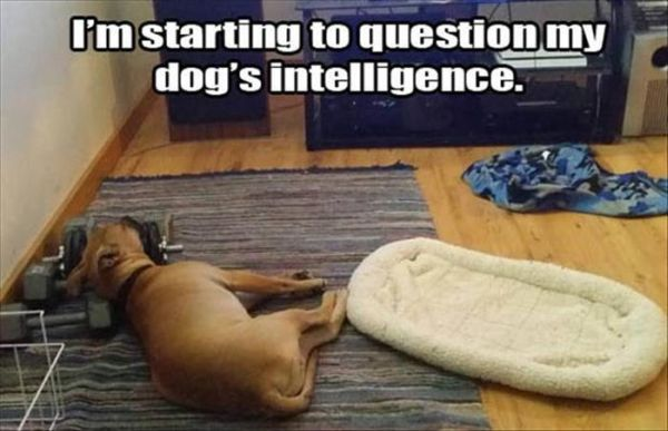 I'm Starting To Question - Dog humor