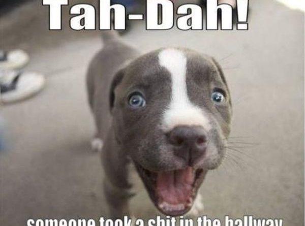 Tah-Dah! - Dog humor