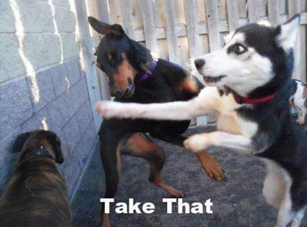 Take That - Dog humor
