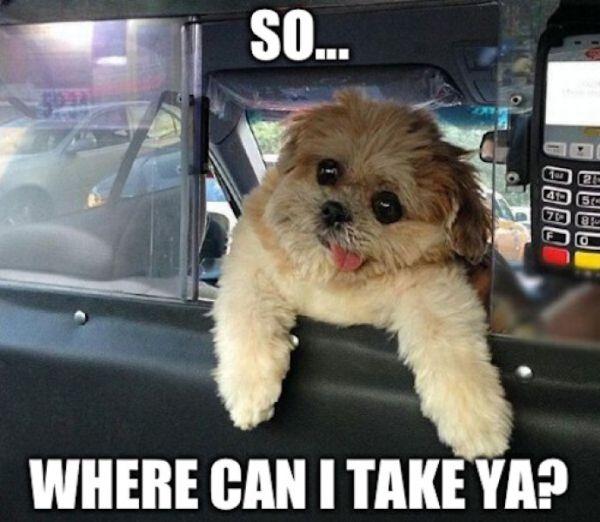 Dog Taxi Driver - Dog humor