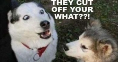 They Cut Off Your What?!?! - Dog humor