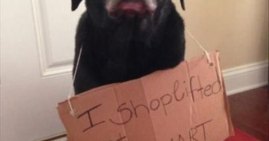 The Thief Exposed - Dog humor