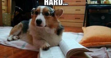 This Homework Looks Hard - Dog humor