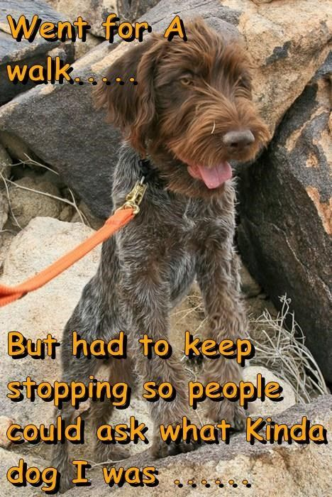 Went For A Walk... - Dog humor