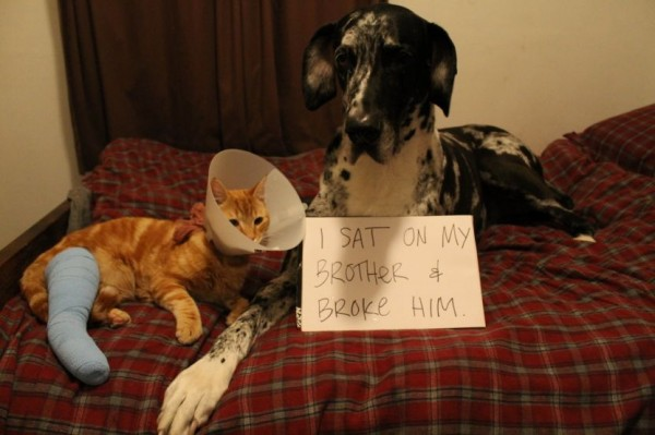 I Sat On My Brother - Dog humor