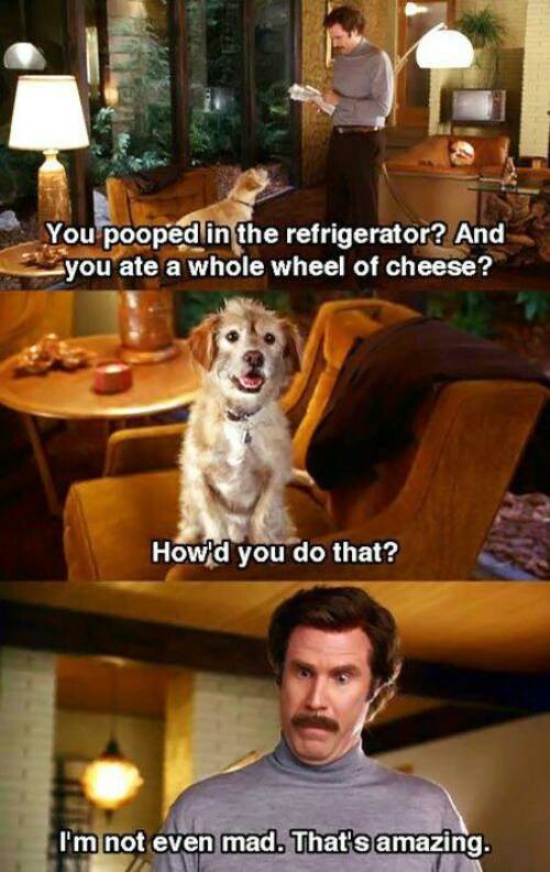 Amazing! - Dog humor