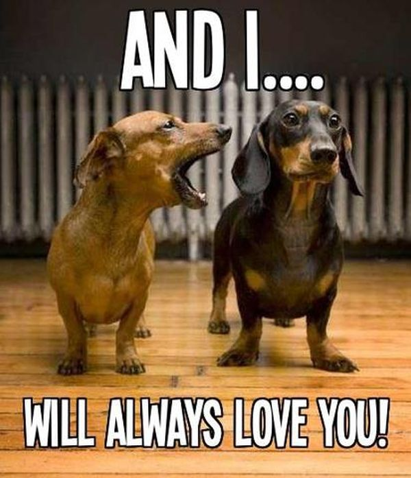 And I Will Always Love You... - Dog humor