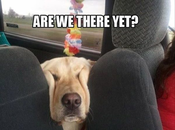 Are We There Yet? - Dog humor
