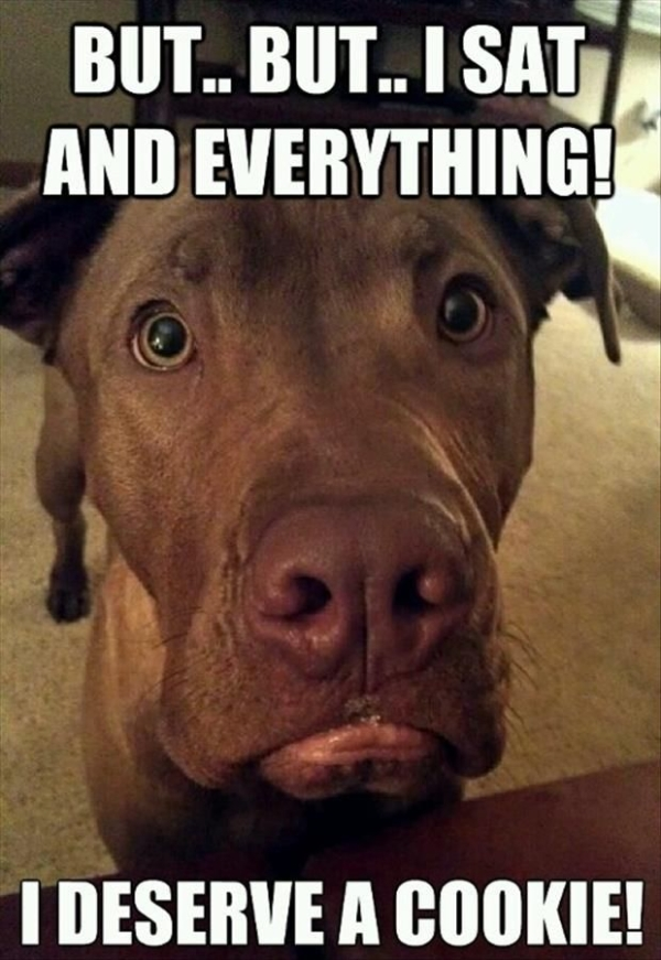 But... But... I Sat And Everything... - Dog humor