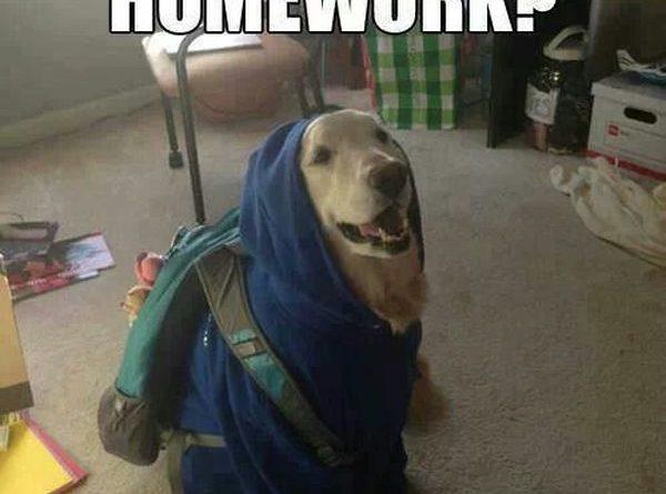 Can I Copy Your Homework - Dog humor