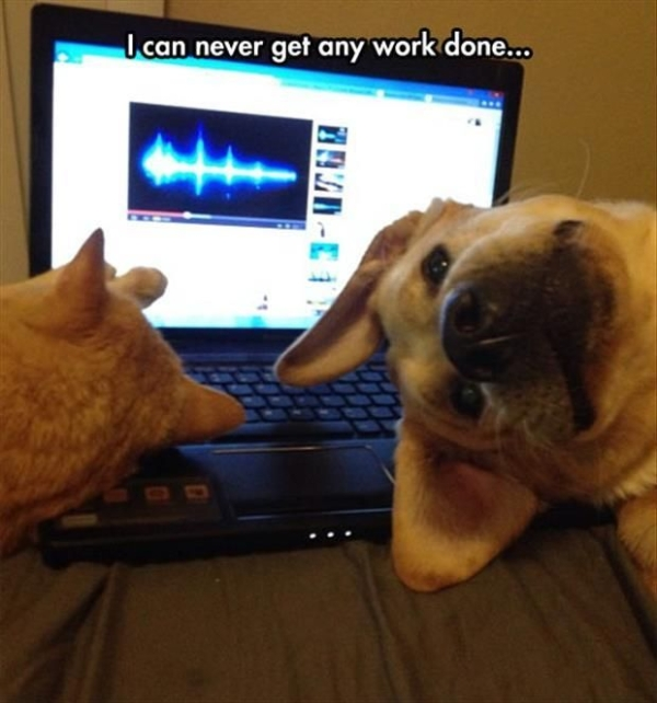 Can't Work Like This - Dog humor