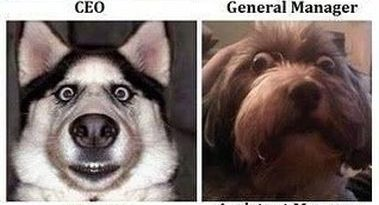 Company Organization - Dog humor