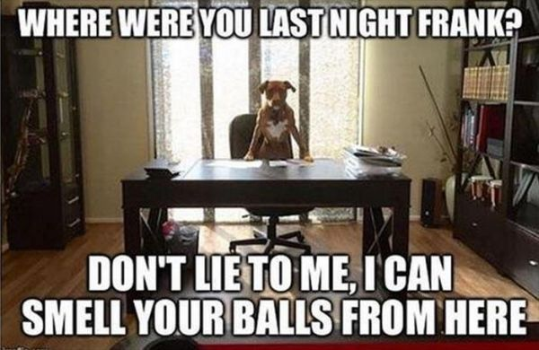 Don't Lie To Me - Dog humor
