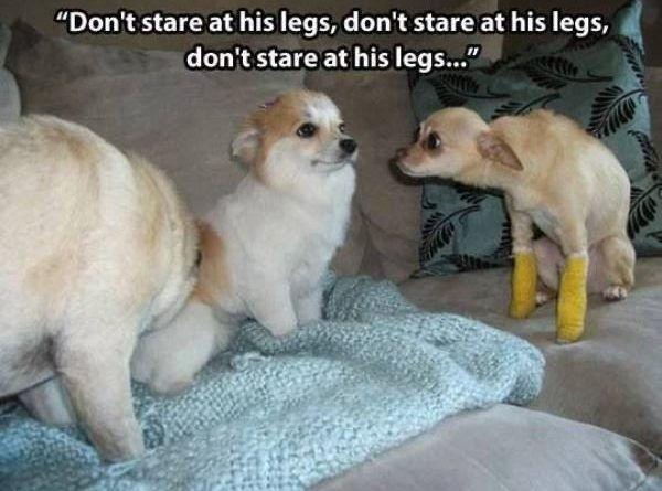 Don't Stare At His Legs - Dog humor