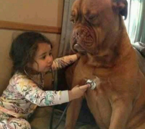 Give It To Me Straight Doc... - Dog humor
