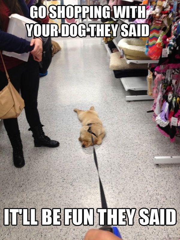 Go Shopping With Your Dog They Said... - Dog humor