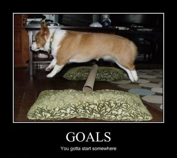 Goals - Dog humor