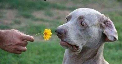 Here Is A Flower For You... - Dog humor