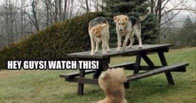 Hey Guys! Watch This - Dog humor