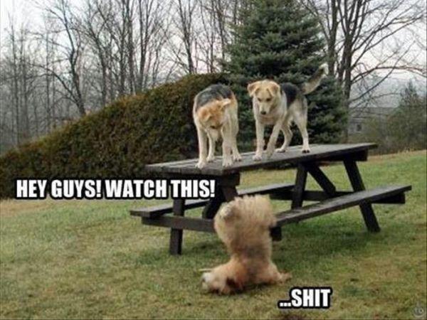 Hey Guys! Watch This - Dog humor