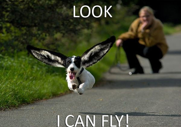 Look, I Can Fly! - Dog humor