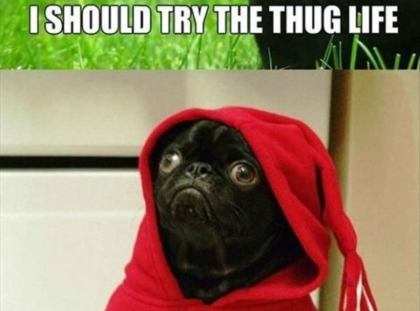 I Should Try Thug Life - Dog humor