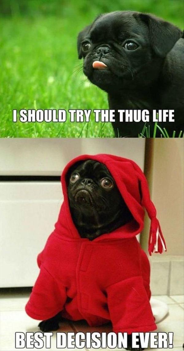 I Should Try Thug Life - Dog humor