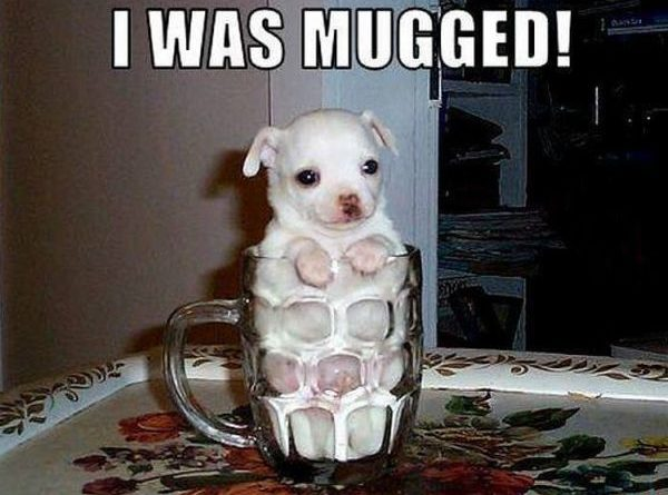 I Was Mugged - Dog humor