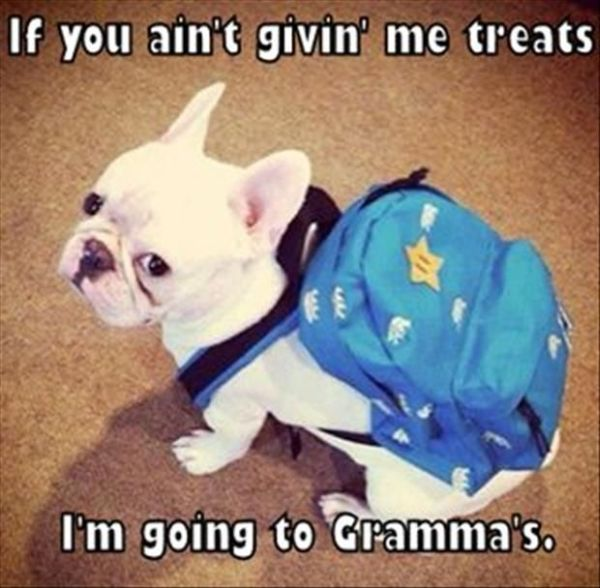 If You Ain't Giving Me Treats - Dog humor