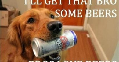I'll Get That Bro Some Beers - Dog humor