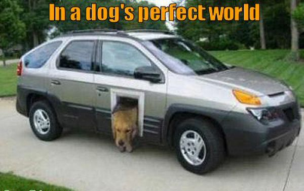 In A Dog's Perfect World - Dog humor